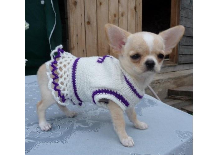 Вязаная одежда на чихуахуа